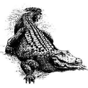 Animal Clip Arts: Alligator Clipart.
