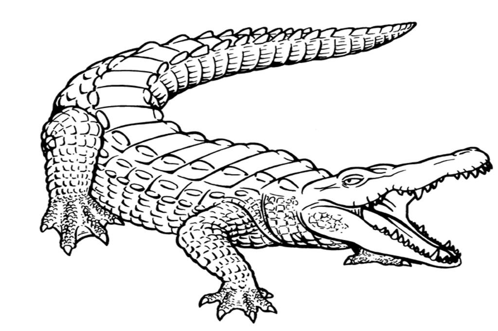 Clipart crocodile black and white.