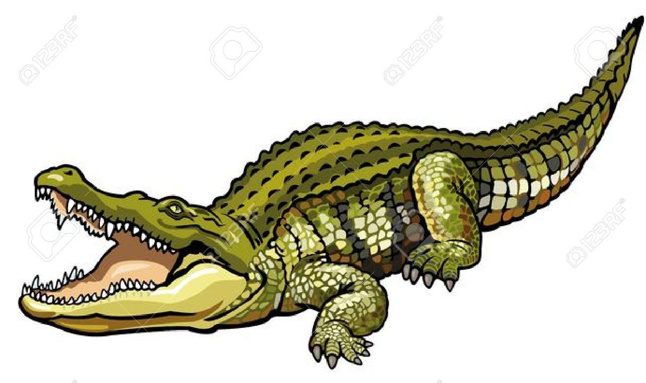 Nile Crocodile,crocodylus Niloticus,wild African Animal,side.