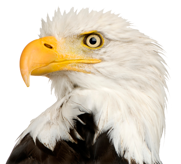 Eagle Transparent PNG, Eagle Head, Bald Eagle Clipart Free.