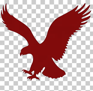 561 american Eagle Outfitters PNG cliparts for free download.