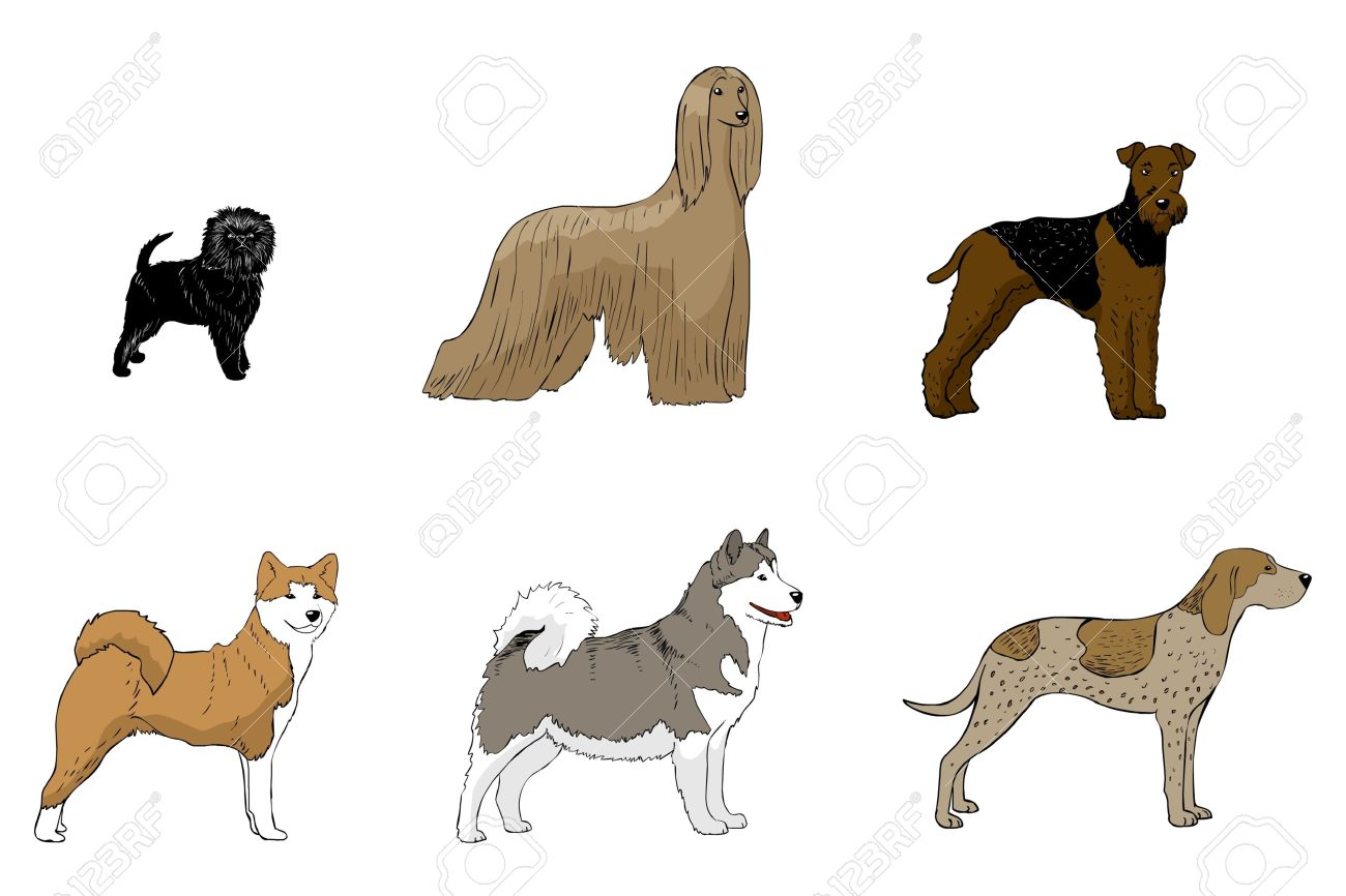 American English Coonhound Clipart.