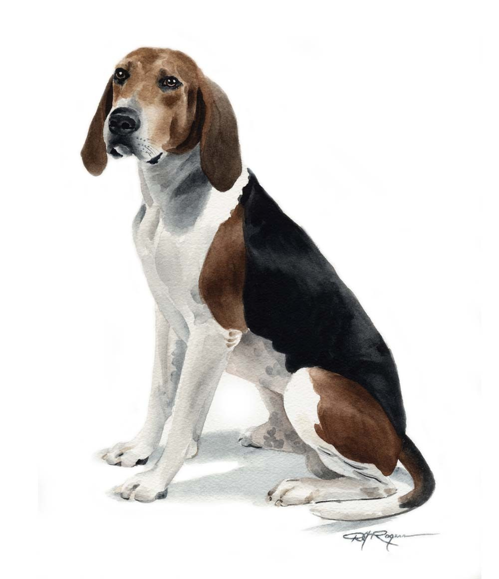 English Coonhound Clipart.