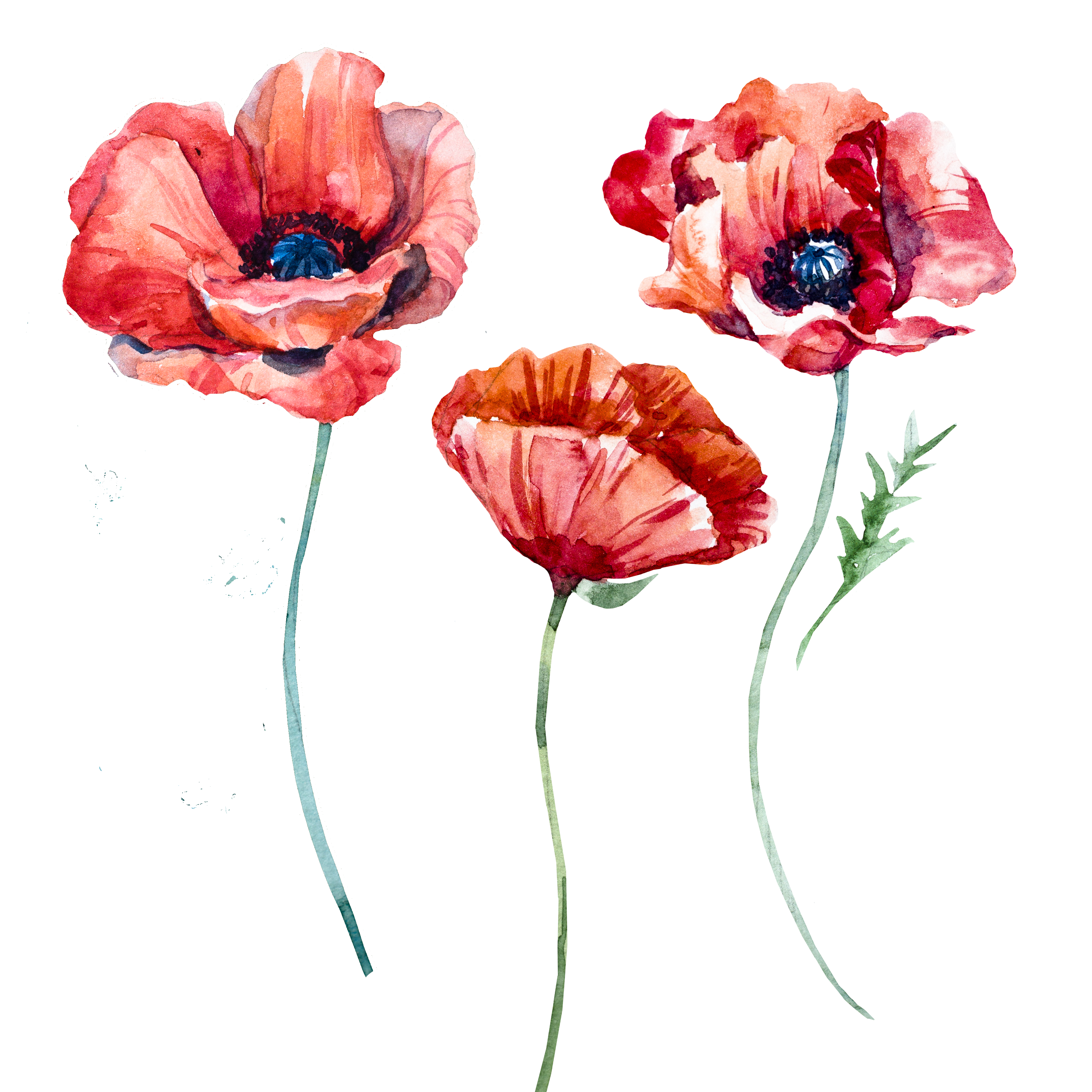 American flag poppies cross clipart clipart images gallery.