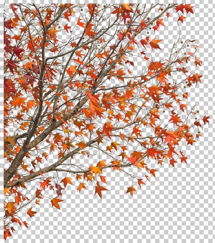 Demaotang Tree Maple Hotel PNG, Clipart, American, American.