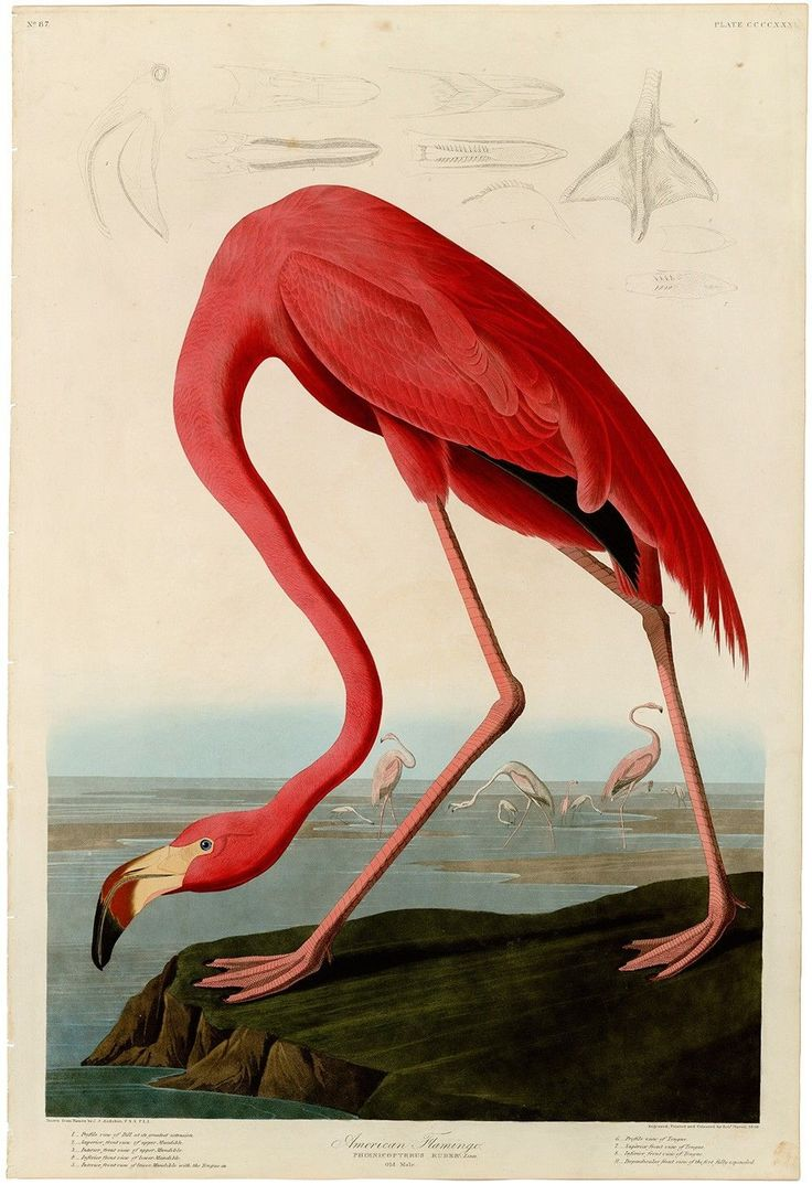 1000+ images about FLAMINGOS on Pinterest.