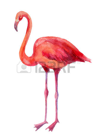 106 American Flamingo Stock Vector Illustration And Royalty Free.