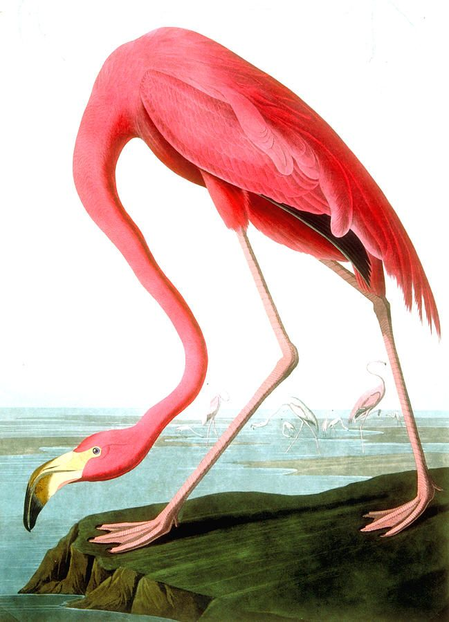 1000+ images about .✿⊱╮Flamingo Dance on Pinterest.