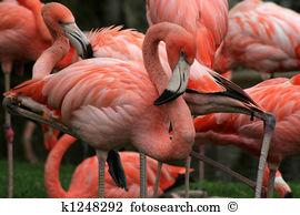 Flamingos Images and Stock Photos. 12,957 flamingos photography.