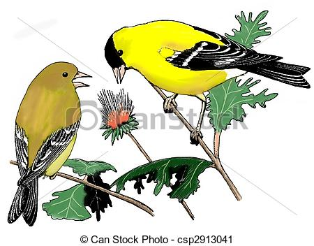 American goldfinch Illustrations and Clip Art. 16 American.