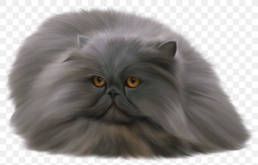 Persian Cat British Shorthair Russian Blue Clip Art, PNG.