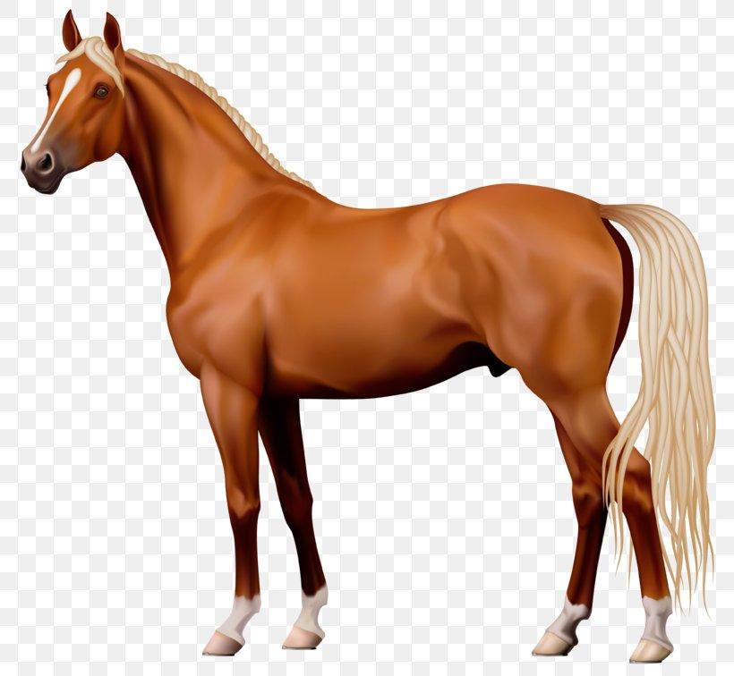 American Quarter Horse Clip Art, PNG, 800x756px, American.