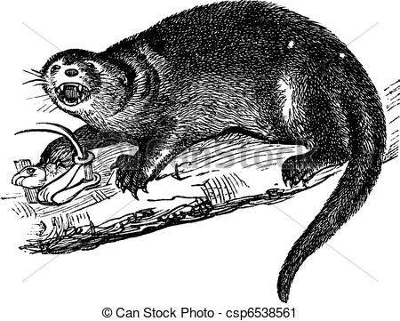 Vector Clip Art of North American river otter or Lontra canadensis.
