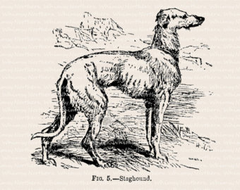 American staghound clipart.