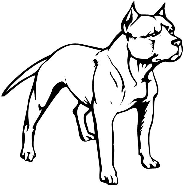 Two Pit Bull Clipart.