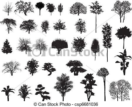 Sycamore Vector Clip Art Illustrations. 323 Sycamore clipart EPS.