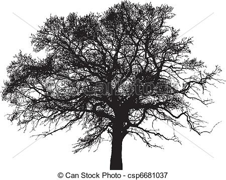 Branches Of Sycamore Tree Clipart Clipground