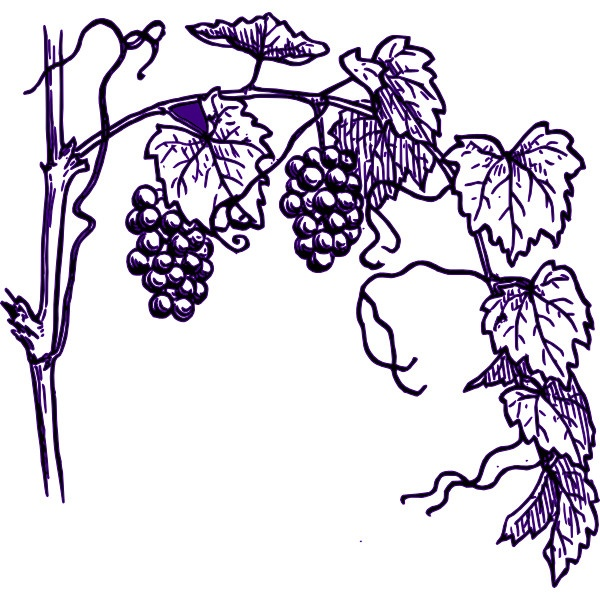 1000+ images about Grape Art on Pinterest.