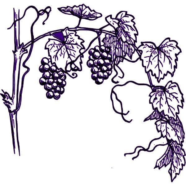 1000+ images about Grape Art on Pinterest.