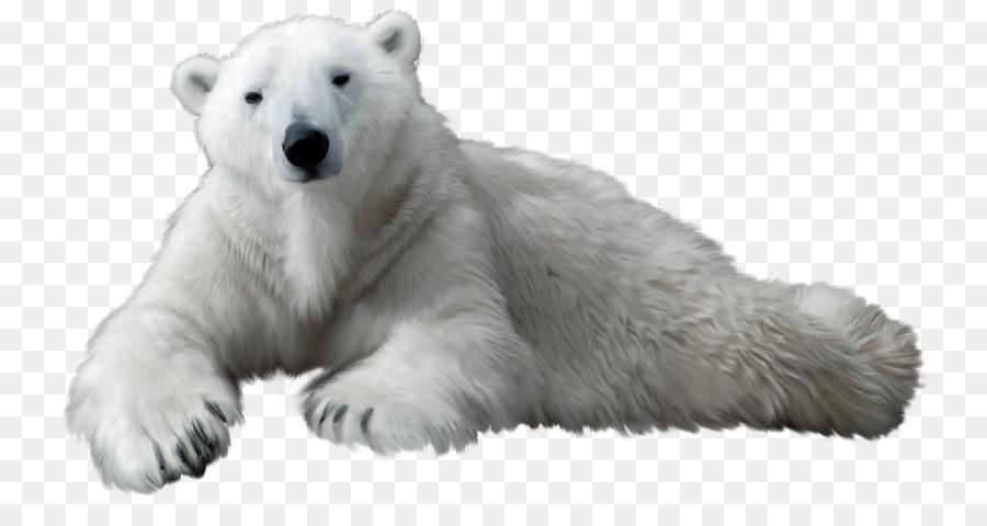 Polar Bear Cartoon clipart.