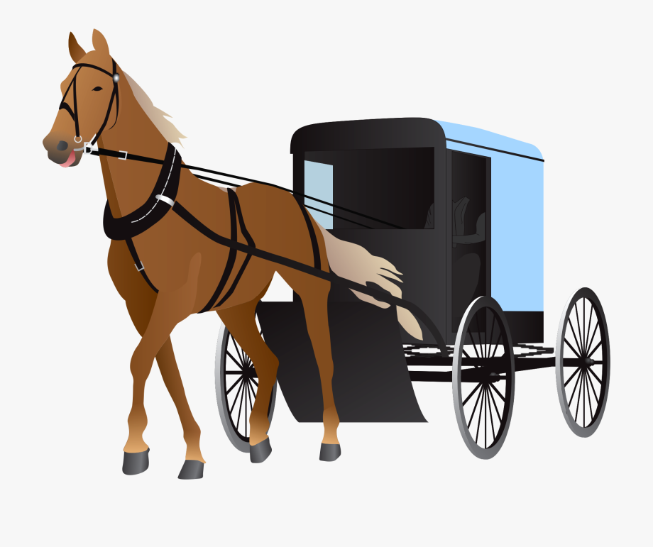 Amish Buggy And Horse.