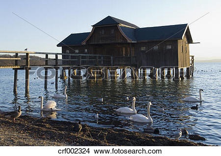 Stock Photo of Germany, Bavaria, Swans and ducks floating on.