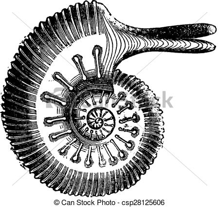 Vector Clipart of Ammonite Jason, vintage engraving..