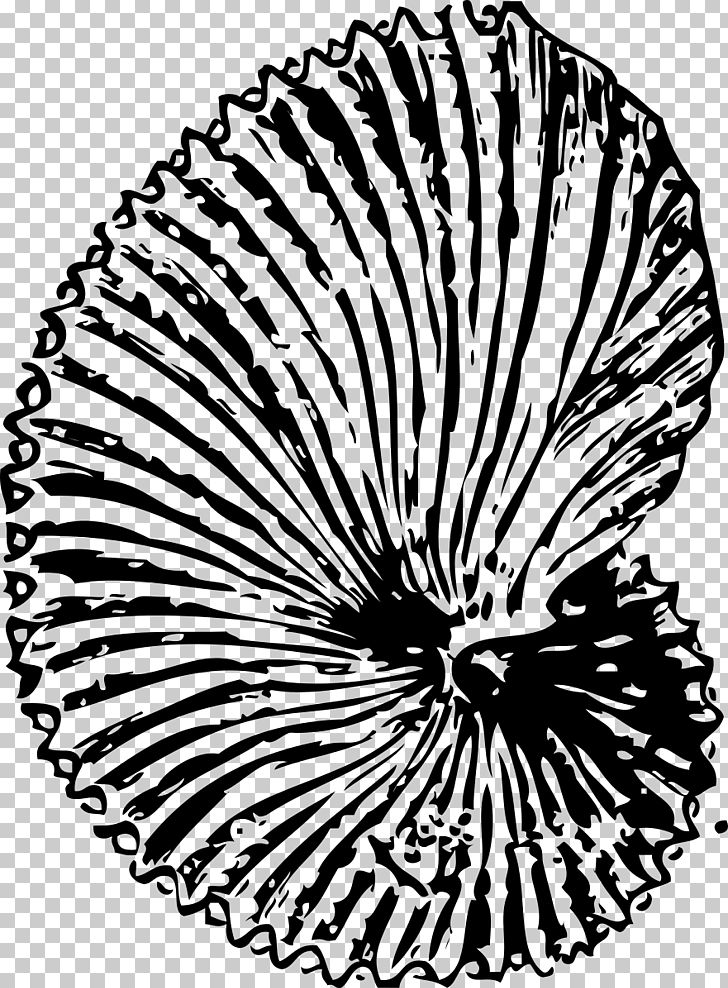 Fossil Seashell PNG, Clipart, Ammonites, Black And White.
