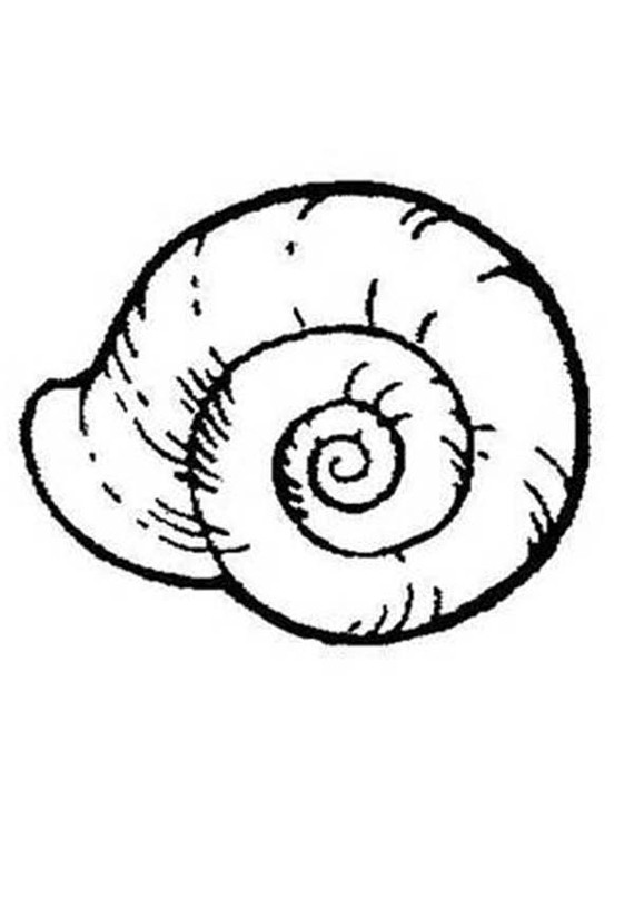 An Extinct Ammonoidea Seashell Coloring Page Download & Print.