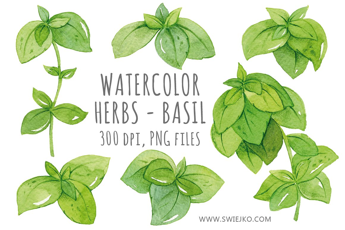 Watercolor , Basil Clip art ~ Illustrations on Creative Market.