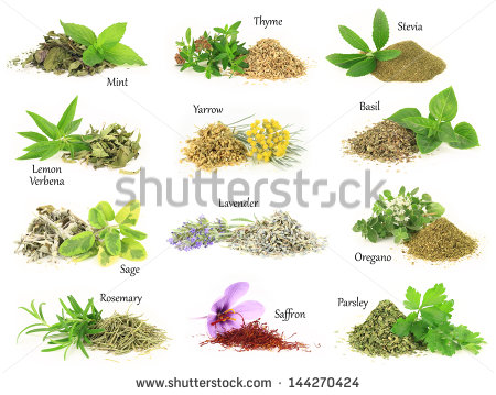 Herb Stock Photos, Royalty.