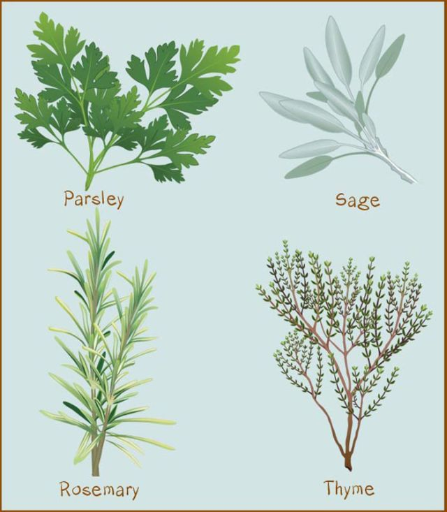 1000+ images about Herbs and Seasonings on Pinterest.