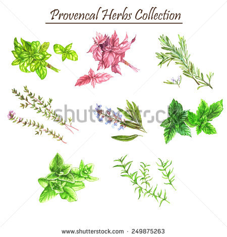 Savory Herb Stock Photos, Royalty.