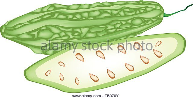 Ampalaya clipart black and white 2 » Clipart Station.
