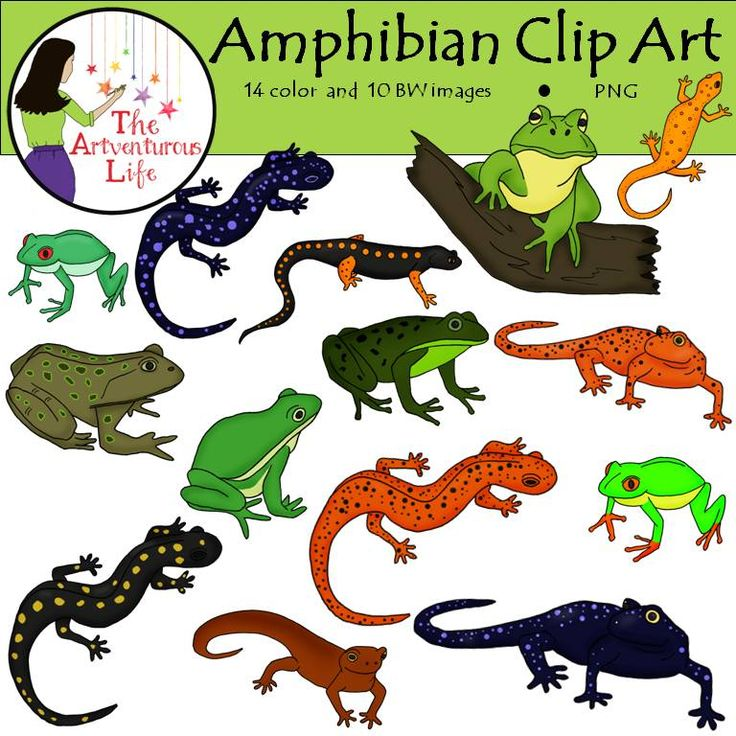 Amphibians clipart - Clipground