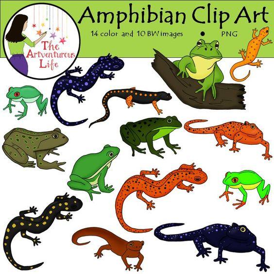 Amphibian Clip Art.
