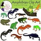 Amphibia clipart.