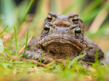 Amphibian Animal Images & Stock Pictures. 68,761 Royalty Free.