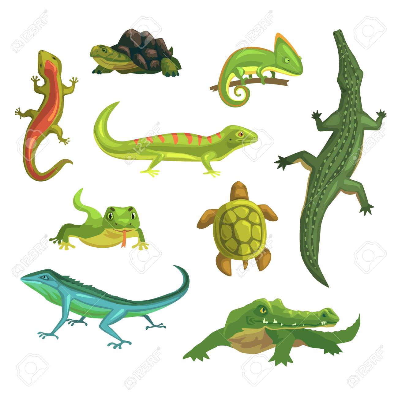 Reptiles and amphibians set of vector Illustrations.