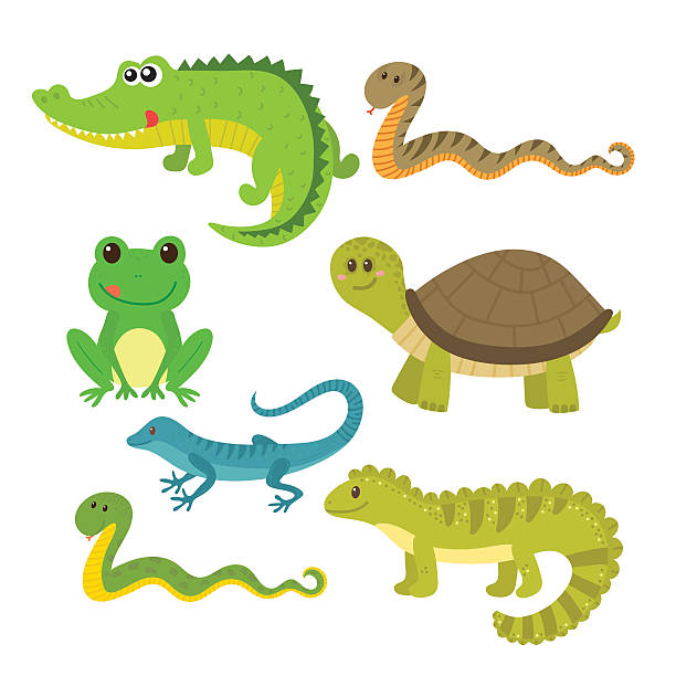 Collection of free Amphibiums clipart amphibian animal.