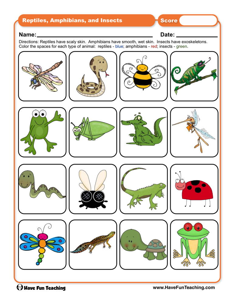 Reptiles, Amphibians, and Insects Worksheet.