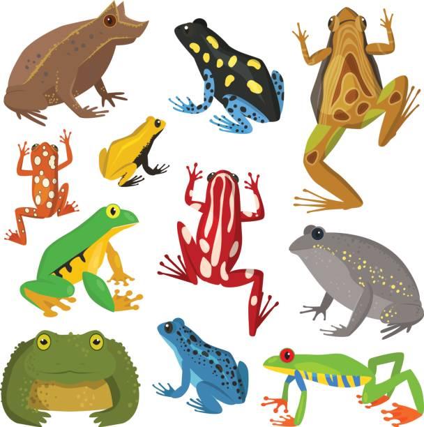 Frog cartoon tropical animal cartoon amphibian vector.