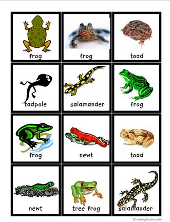 Here\'s a set of animals cards containing images of insects.