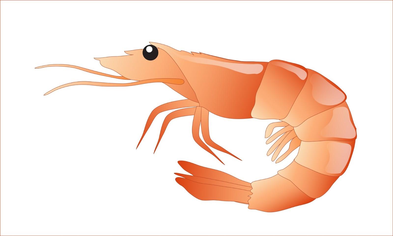 Free Shrimp Clipart, Download Free Clip Art, Free Clip Art.
