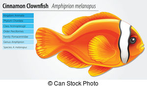 Amphiprion Vector Clipart Royalty Free. 51 Amphiprion clip art.