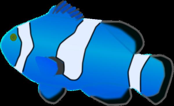 Aquarium fish Amphiprion percula.