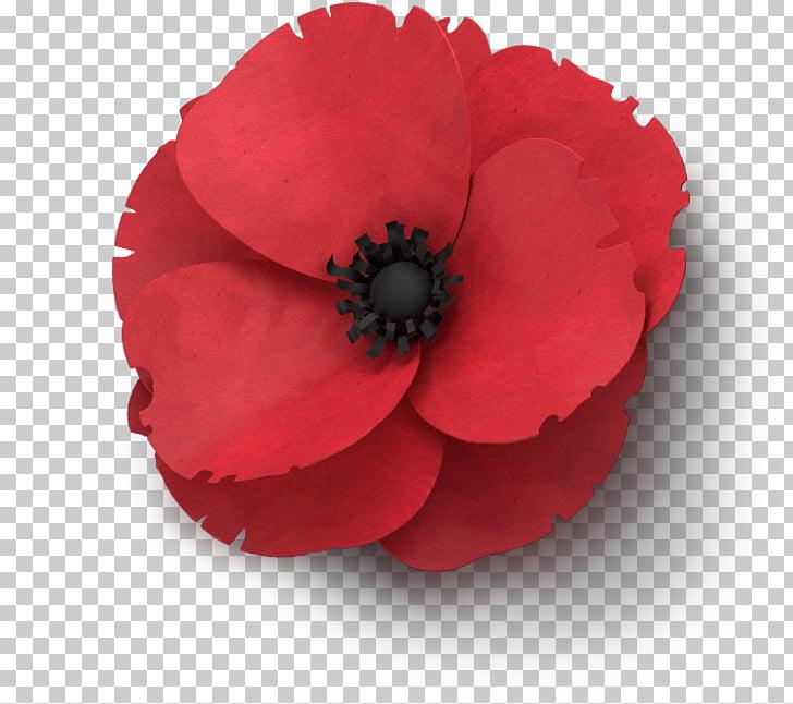 Remembrance poppy Flower In Flanders Fields Armistice Day.