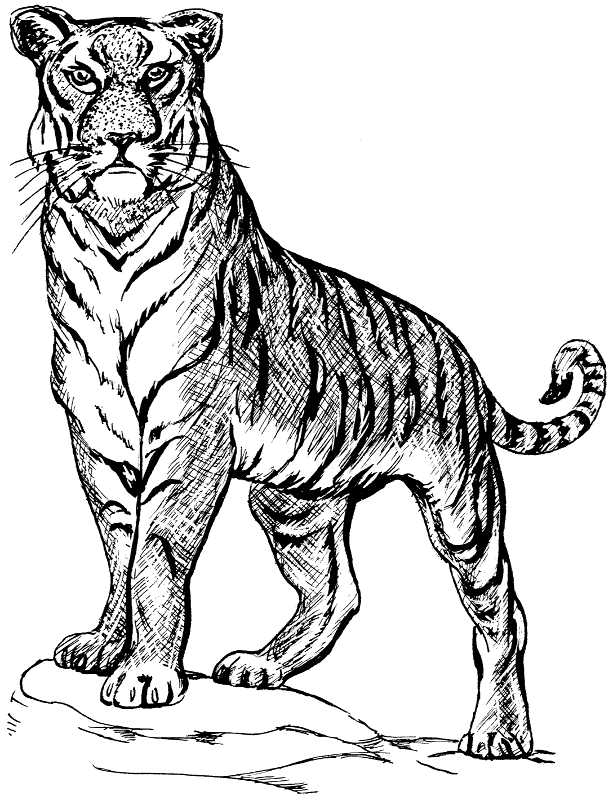 Free Siberian Tiger Clipart, 1 page of Public Domain Clip Art.