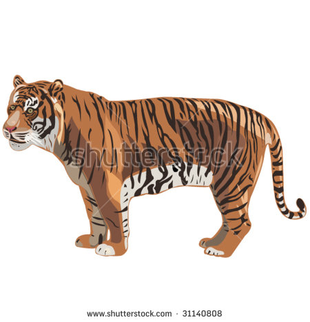 Three Tigers World Siberian Tigersumatran Tiger Stock Vector.