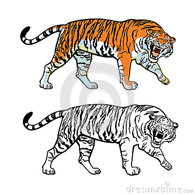 Siberian Tiger Stock Photography.